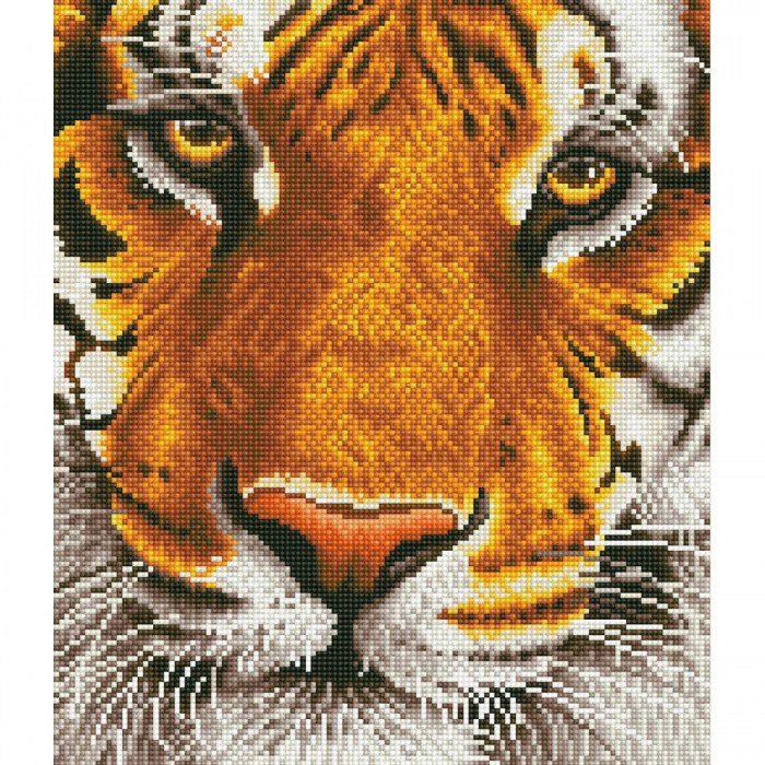 DD8.001 - Bengal Magic-1200x1200
